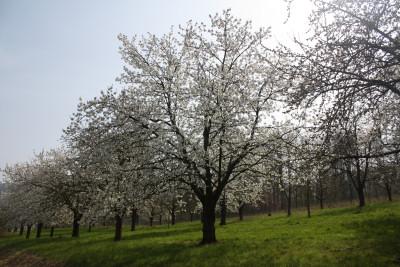 fruehling-2014-1