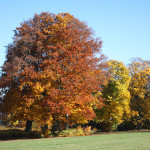 Herbst auf dem Kienberg, Freudenstadt