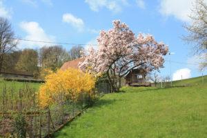 Frühlingsbild Schwarzwald
